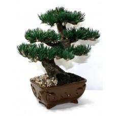 Дерево бонсай ВДОХНОВЕНИЕ