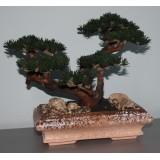 Дерево бонсай ВЕЧЕРНИЙ СТИХ
